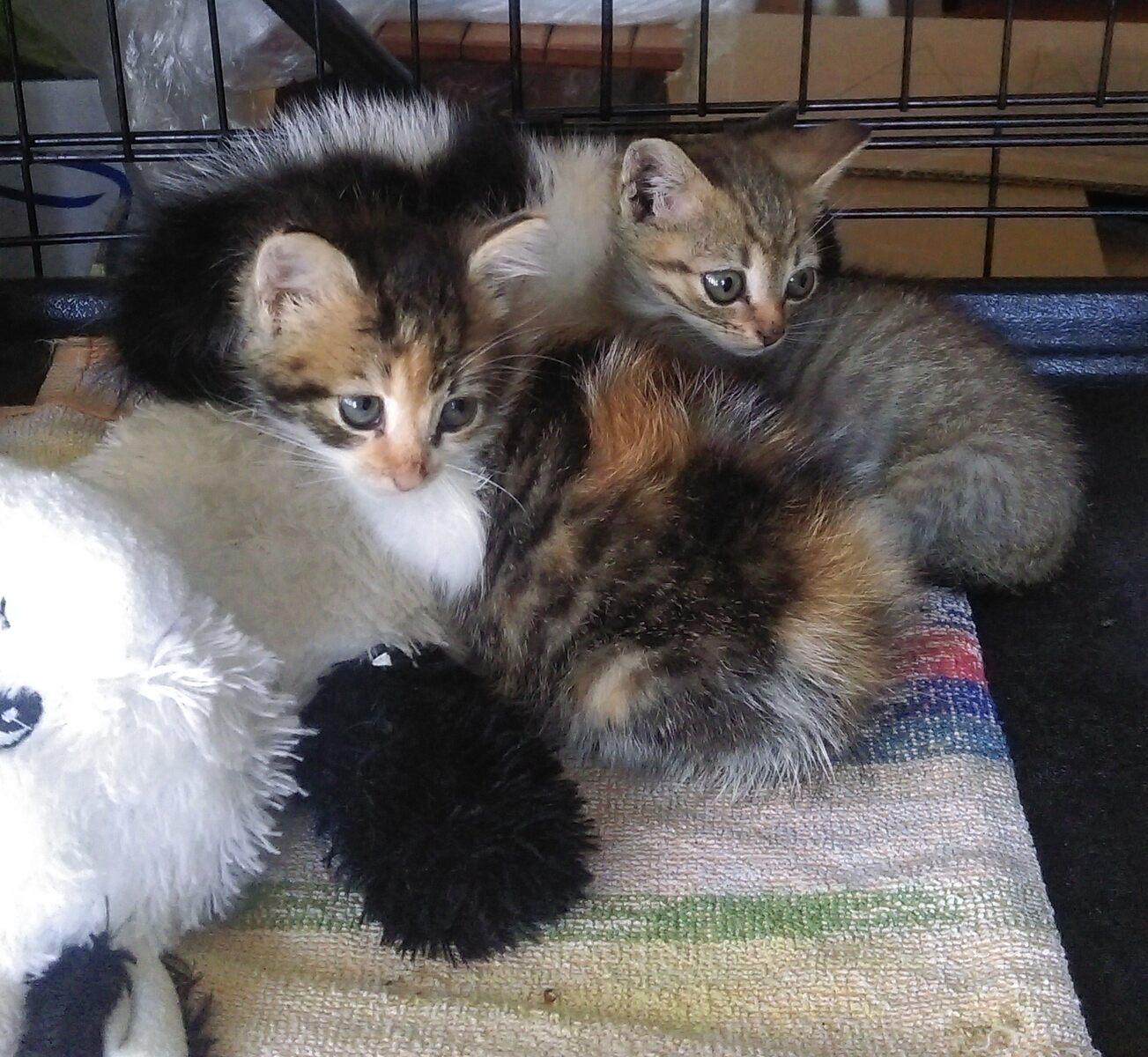 Kocięta do adopcji – pomóż znaleźć dla nich nowy dom!