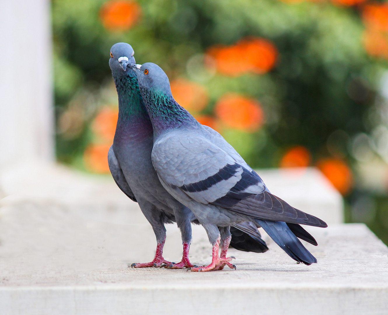Rozporządzenie Wojewody Małopolskiego w sprawie zakazu organizowania targów, wystaw i pokazów z udziałem ptaków